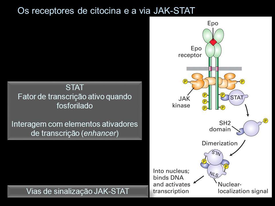 Os receptores de citocina e a via JAK-STAT