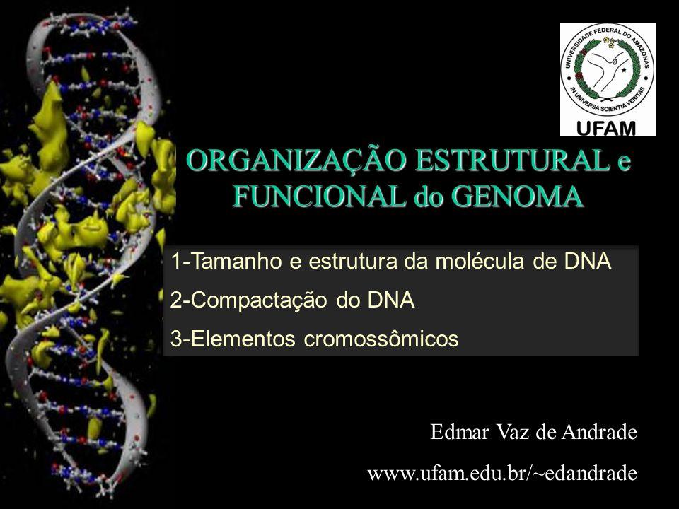 ORGANIZAÇÃO ESTRUTURAL e FUNCIONAL do GENOMA