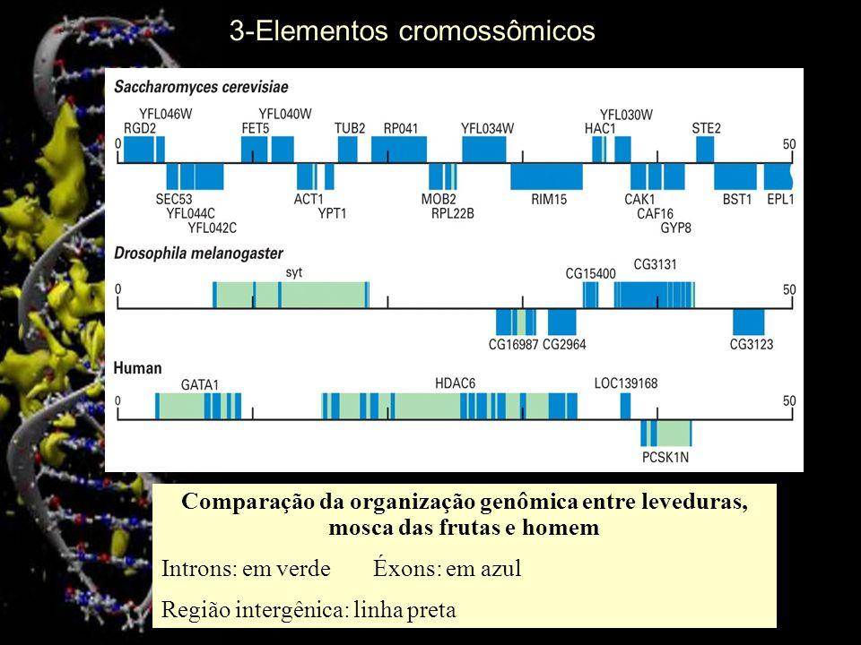 3-Elementos cromossômicos