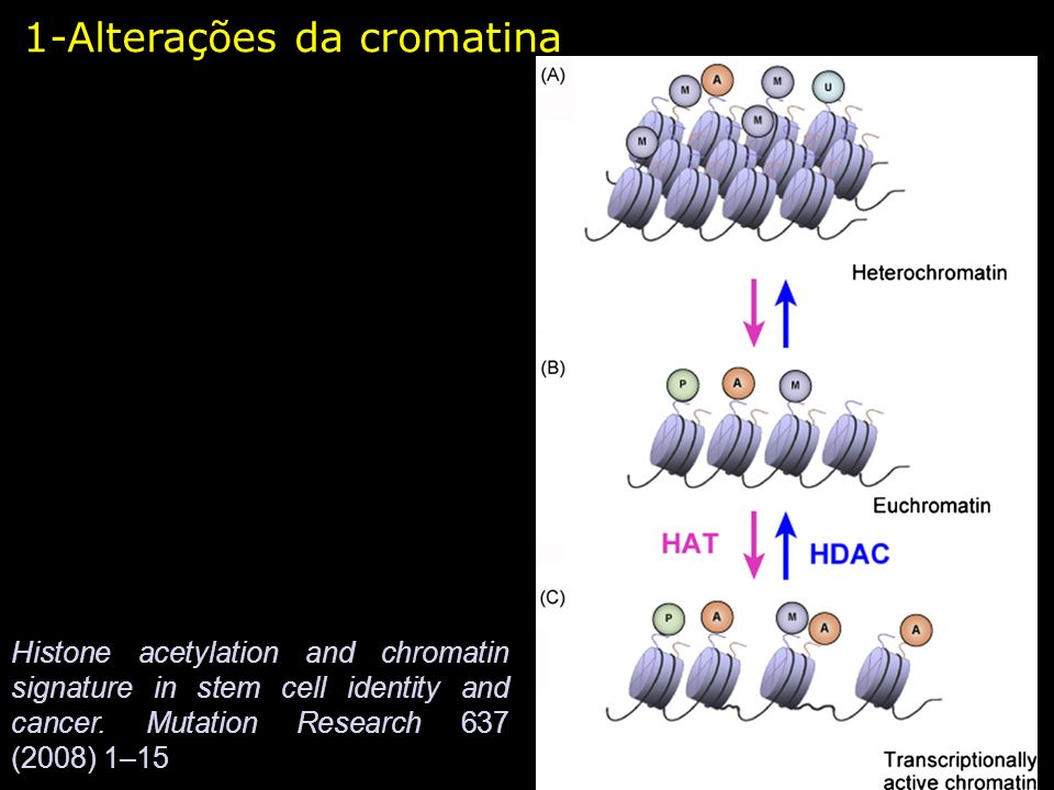 1-Alterações da cromatina