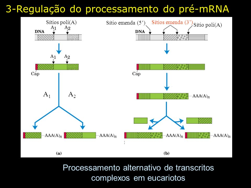Processamento alternativo de transcritos complexos em eucariotos
