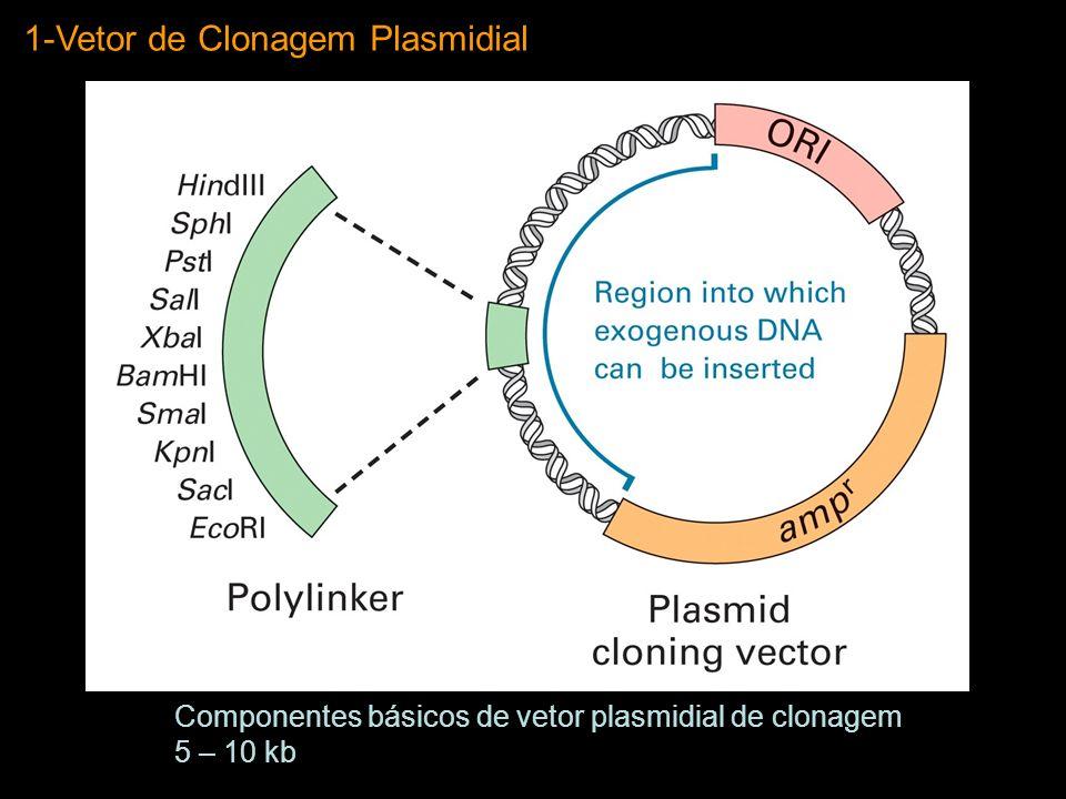 1-Vetor de Clonagem Plasmidial