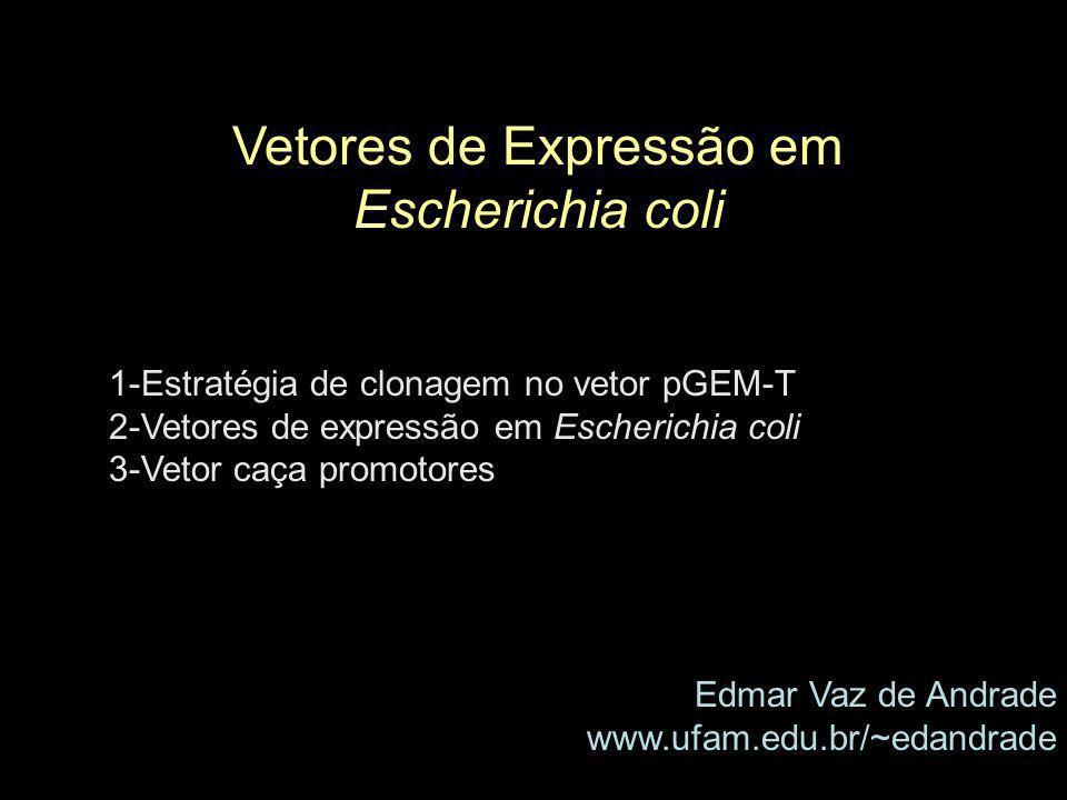Vetores de Expressão em Escherichia coli