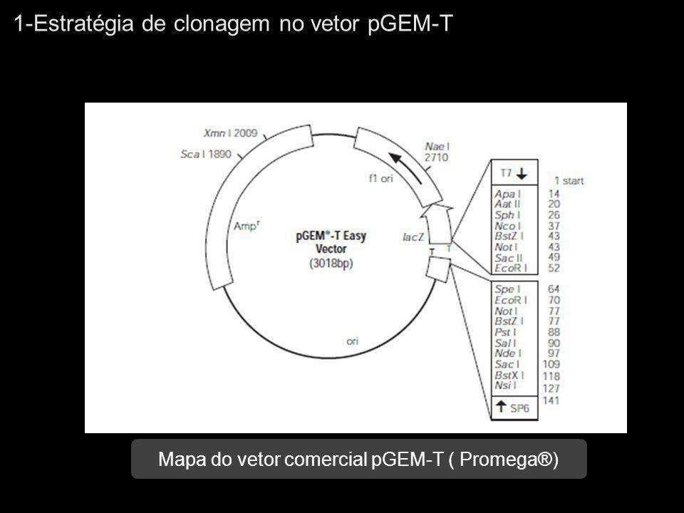 Mapa do vetor comercial pGEM-T ( Promega®)