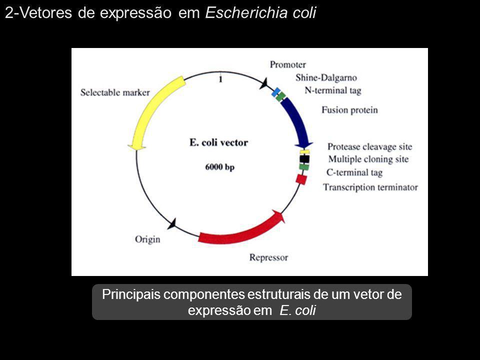 Principais componentes estruturais de um vetor de expressão em E. coli