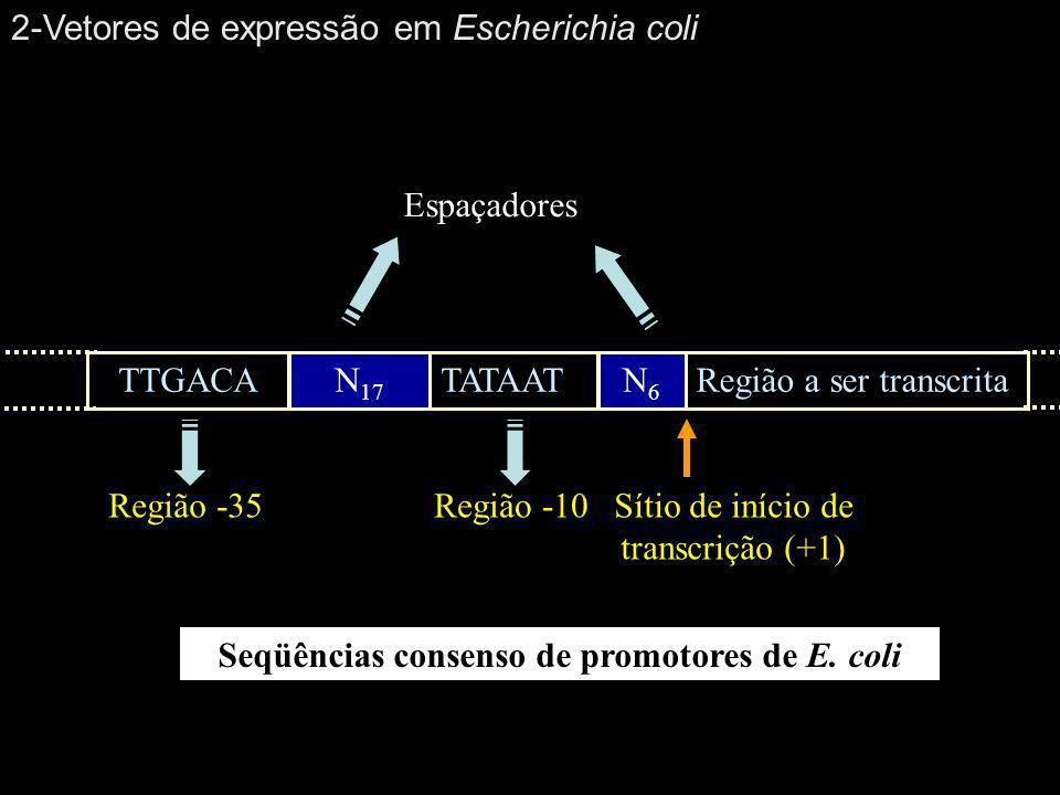 Seqüências consenso de promotores de E. coli