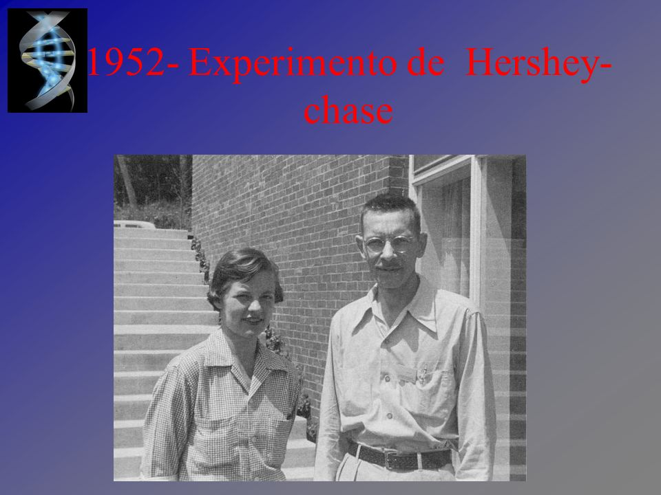 1952- Experimento de Hershey-chase