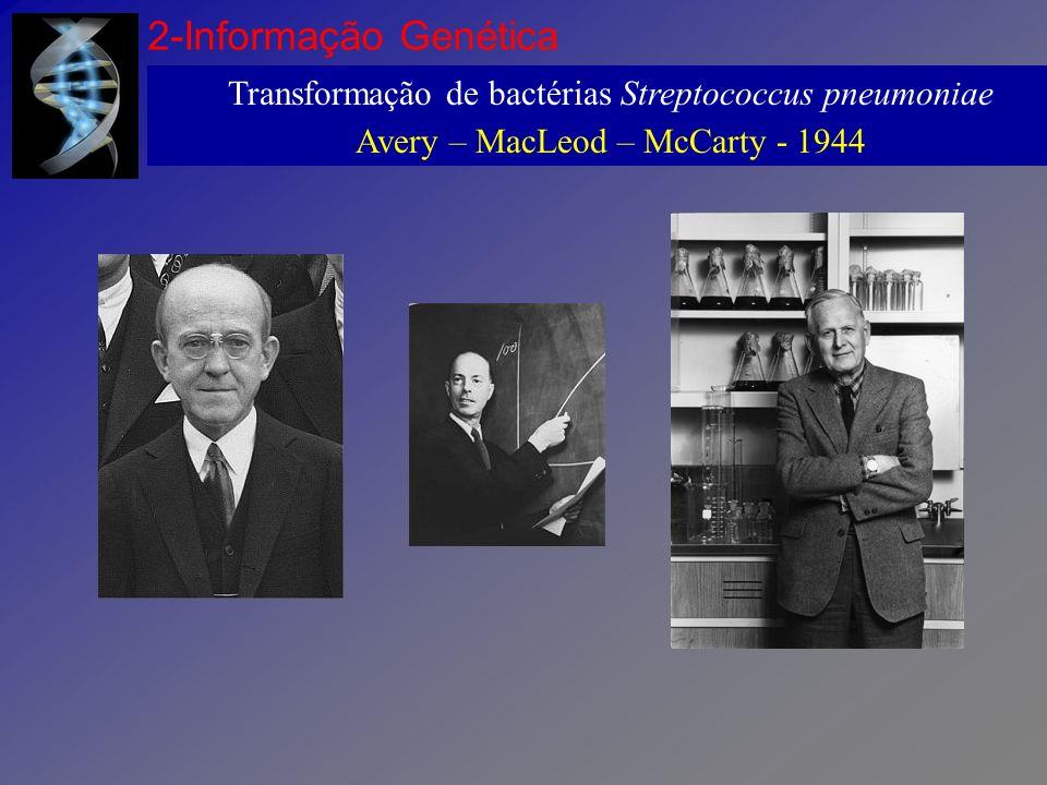 2-Informação Genética Transformação de bactérias Streptococcus pneumoniae.