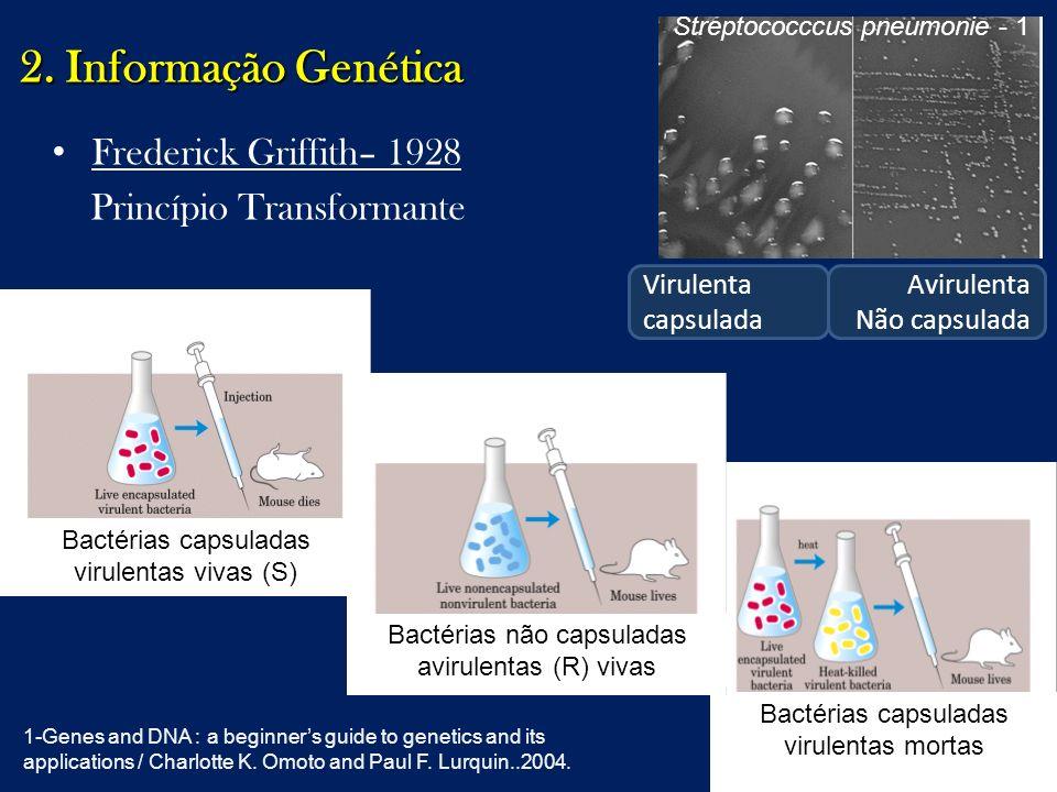 2. Informação Genética Frederick Griffith– 1928
