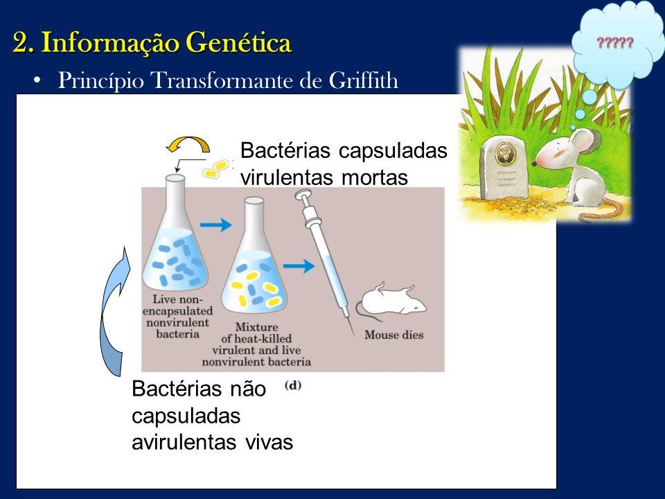 2. Informação Genética Princípio Transformante de Griffith