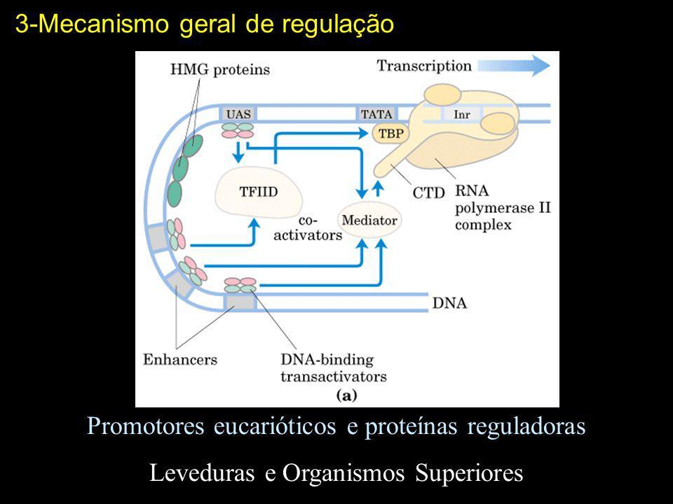 3-Mecanismo geral de regulação