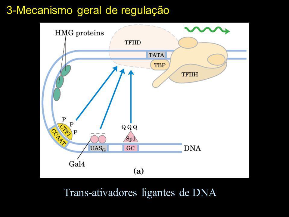 Trans-ativadores ligantes de DNA