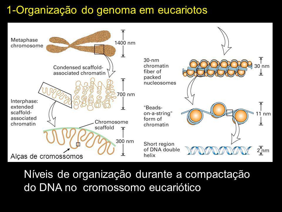 1-Organização do genoma em eucariotos