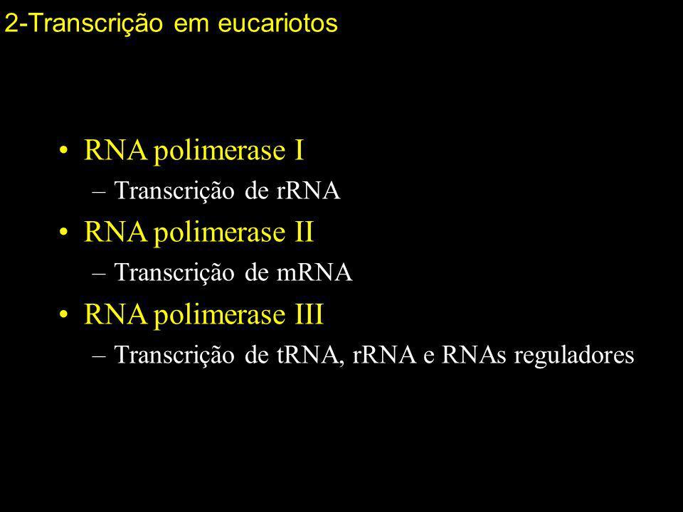 RNA polimerase I RNA polimerase II RNA polimerase III