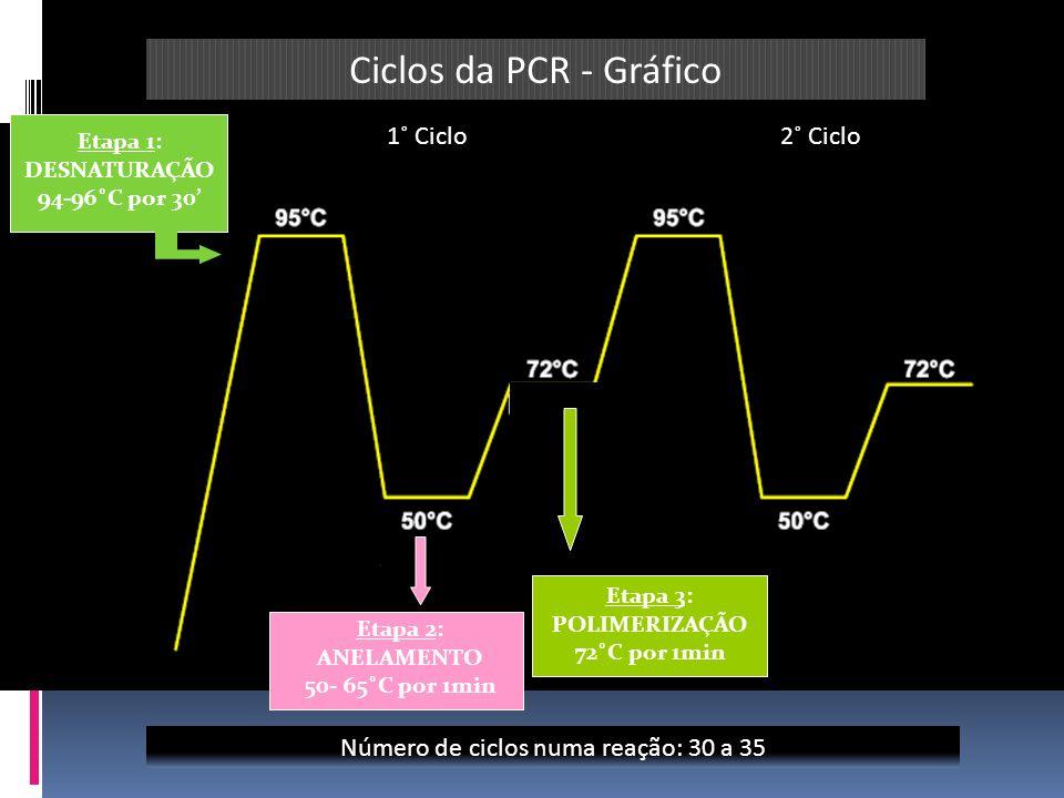 Ciclos da PCR - Gráfico 1˚ Ciclo 2˚ Ciclo