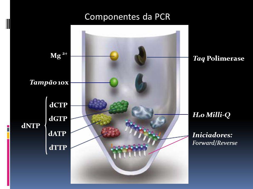 Componentes da PCR Mg 2+ Taq Polimerase Tampão 10x dCTP H20 Milli-Q