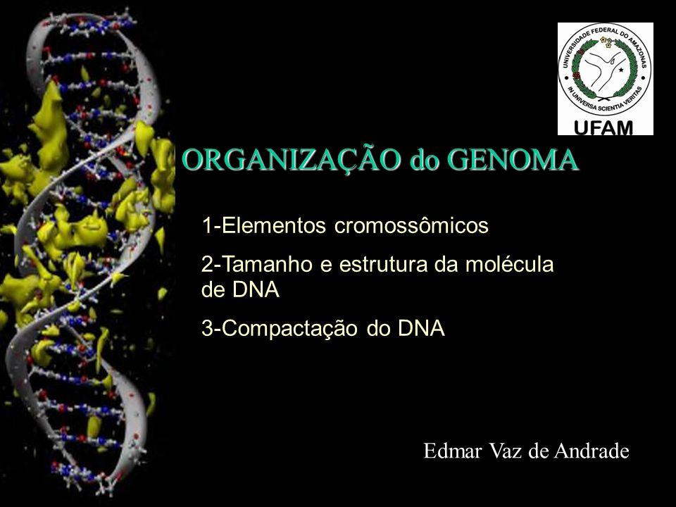 ORGANIZAÇÃO do GENOMA 1-Elementos cromossômicos
