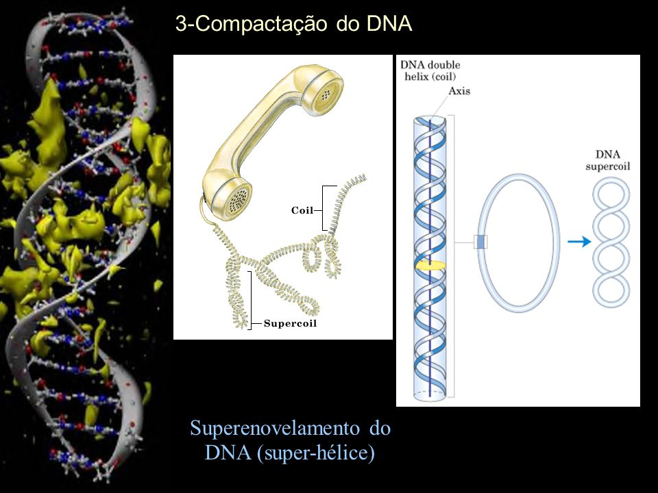 Superenovelamento do DNA (super-hélice)