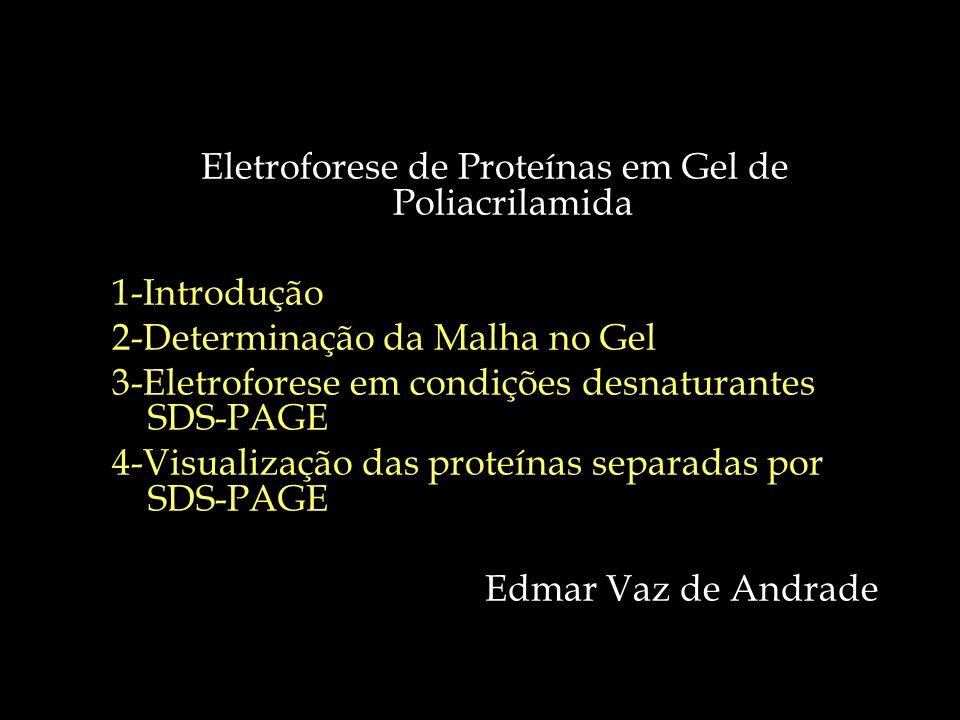 Eletroforese de Proteínas em Gel de Poliacrilamida