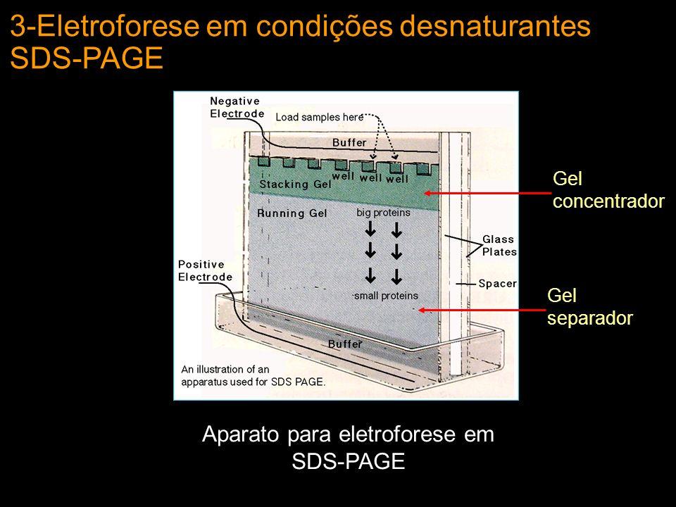 Aparato para eletroforese em SDS-PAGE