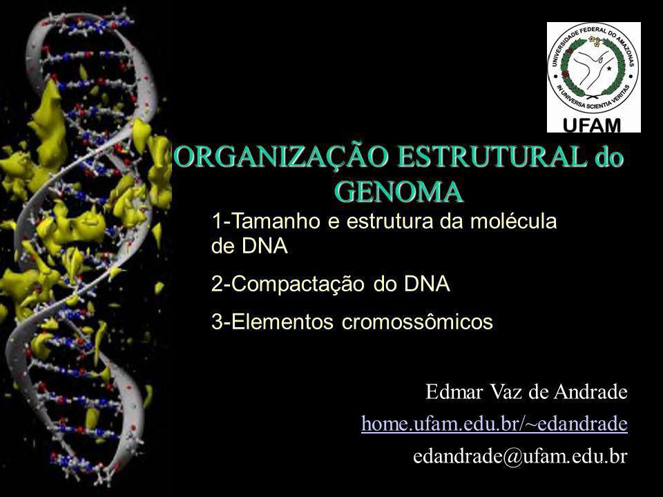 ORGANIZAÇÃO ESTRUTURAL do GENOMA