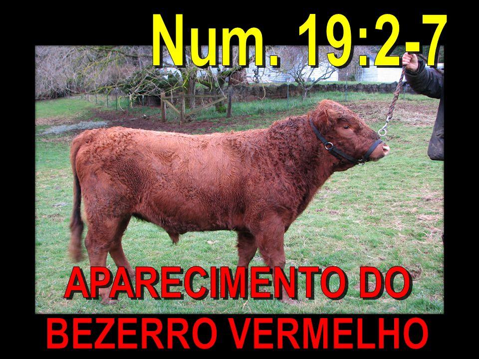 Num. 19:2-7 APARECIMENTO DO BEZERRO VERMELHO