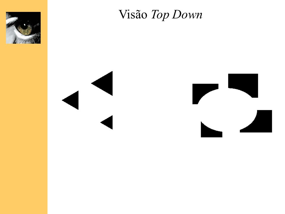 Visão Top Down The famous Muller-Lyer illusion; the point is that the horizontal bar has properties that come only from its membership in.