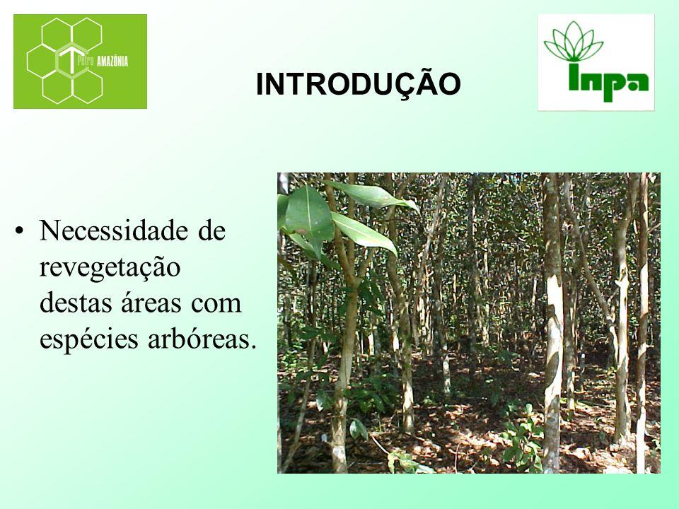 INTRODUÇÃO Necessidade de revegetação destas áreas com espécies arbóreas.