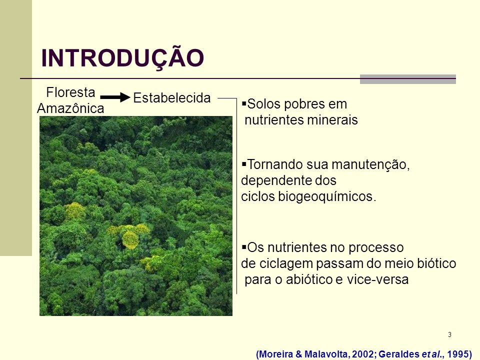 INTRODUÇÃO Floresta Amazônica Estabelecida Solos pobres em