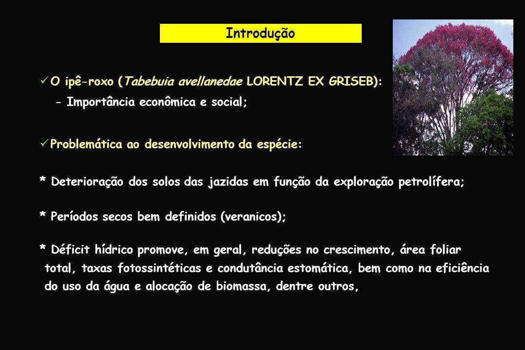 Introdução O ipê-roxo (Tabebuia avellanedae LORENTZ EX GRISEB):