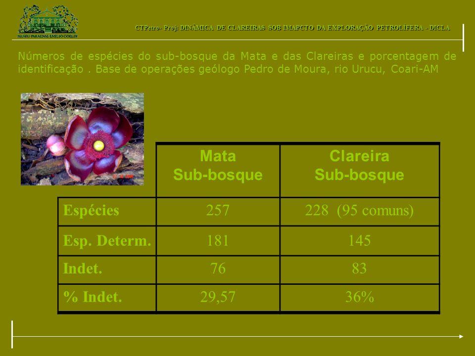Mata Sub-bosque Clareira