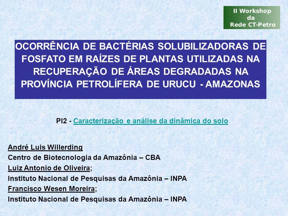 OCORRÊNCIA DE BACTÉRIAS SOLUBILIZADORAS DE FOSFATO EM RAÍZES DE PLANTAS UTILIZADAS NA RECUPERAÇÃO DE ÁREAS DEGRADADAS NA PROVÍNCIA PETROLÍFERA DE URUCU - AMAZONAS