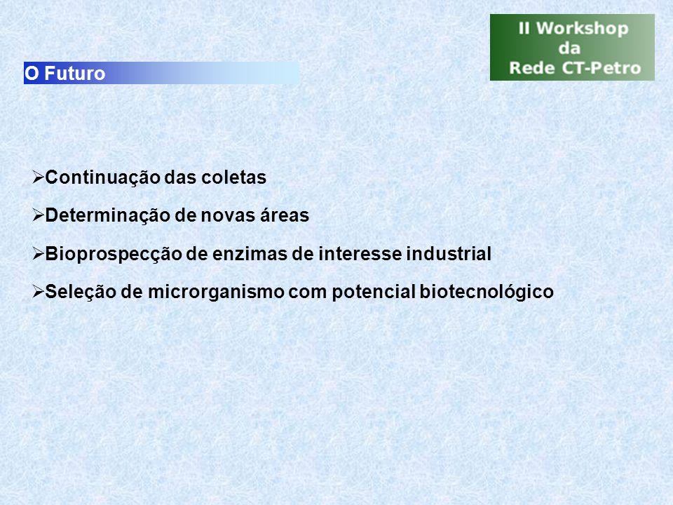 O Futuro Continuação das coletas. Determinação de novas áreas. Bioprospecção de enzimas de interesse industrial.
