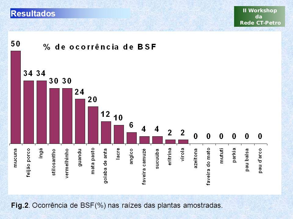 Resultados Fig.2. Ocorrência de BSF(%) nas raízes das plantas amostradas.