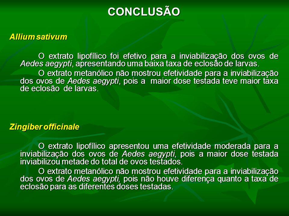 CONCLUSÃO Allium sativum