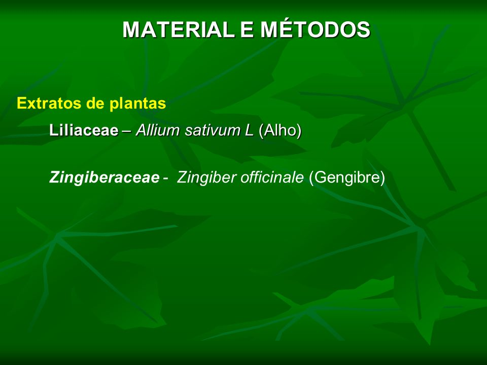 MATERIAL E MÉTODOS Liliaceae – Allium sativum L (Alho)