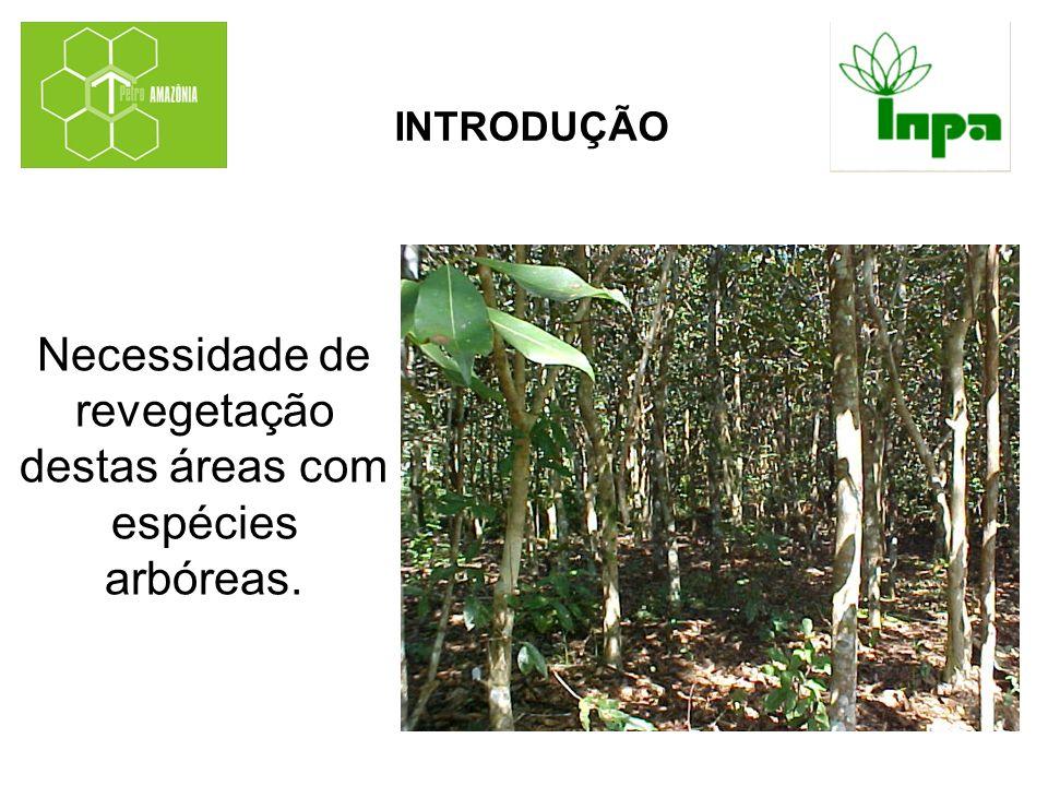 Necessidade de revegetação destas áreas com espécies arbóreas.