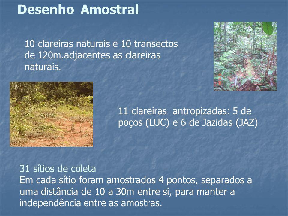 Desenho Amostral 10 clareiras naturais e 10 transectos de 120m.adjacentes as clareiras naturais.