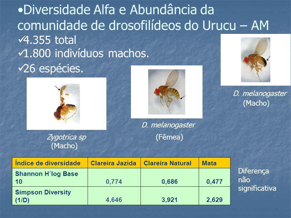 Diversidade Alfa e Abundância da comunidade de drosofilídeos do Urucu – AM