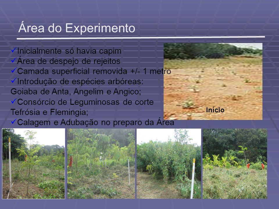 Área do Experimento Inicialmente só havia capim