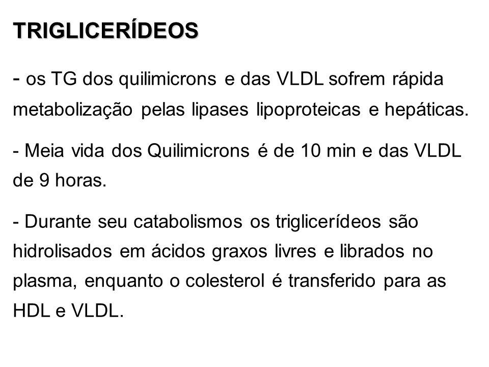 TRIGLICERÍDEOS os TG dos quilimicrons e das VLDL sofrem rápida metabolização pelas lipases lipoproteicas e hepáticas.