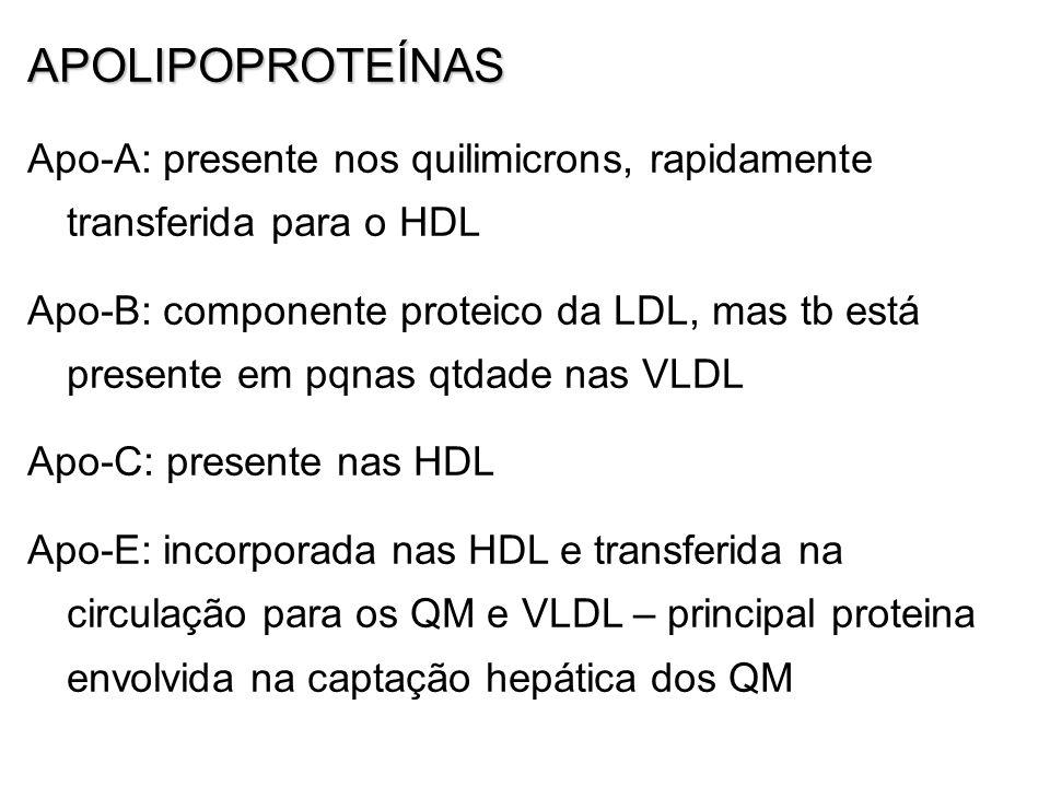 APOLIPOPROTEÍNAS Apo-A: presente nos quilimicrons, rapidamente transferida para o HDL.