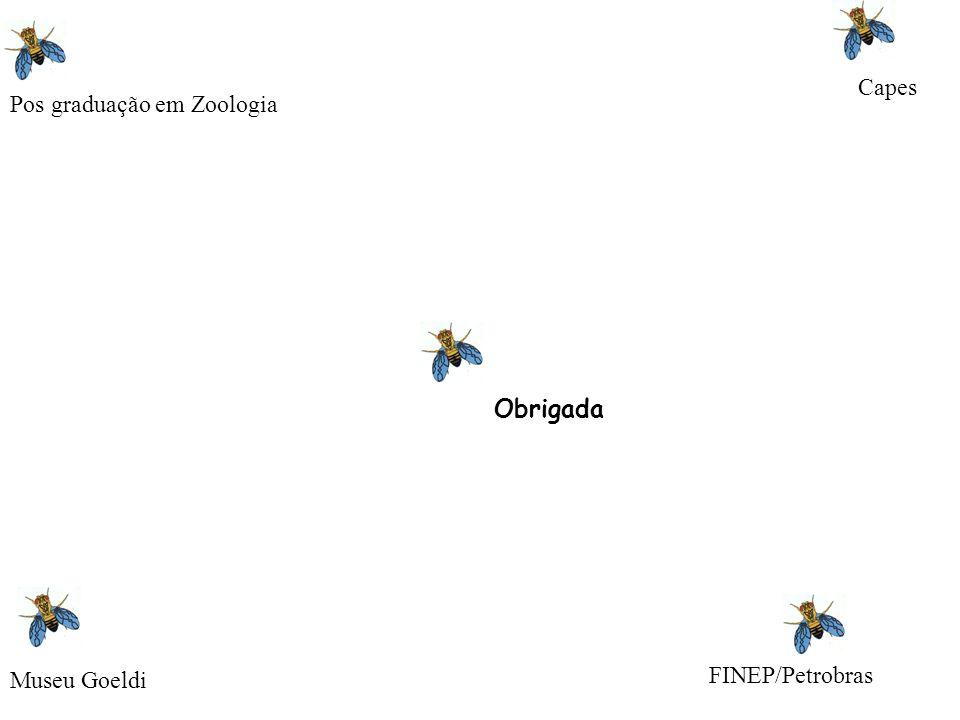 Capes Pos graduação em Zoologia Obrigada Museu Goeldi FINEP/Petrobras