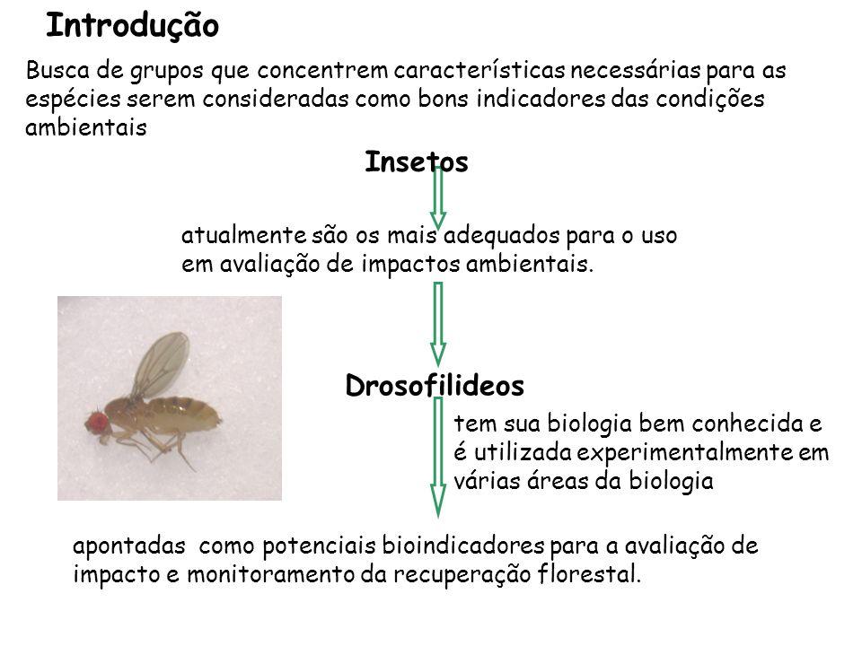 Introdução Insetos Drosofilideos