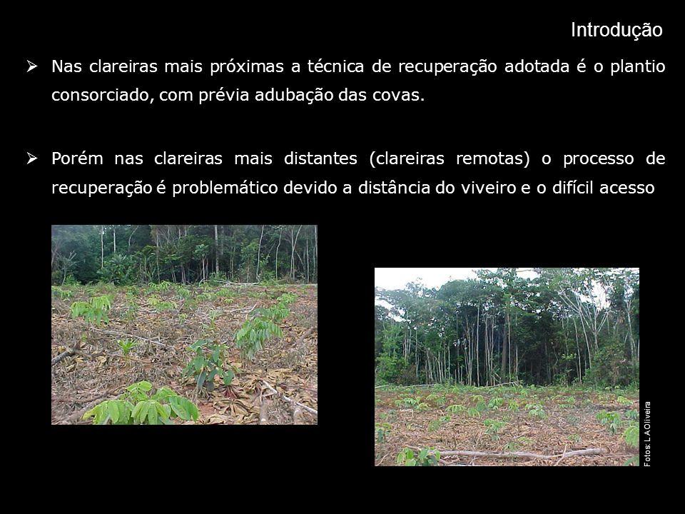 IntroduçãoNas clareiras mais próximas a técnica de recuperação adotada é o plantio consorciado, com prévia adubação das covas.
