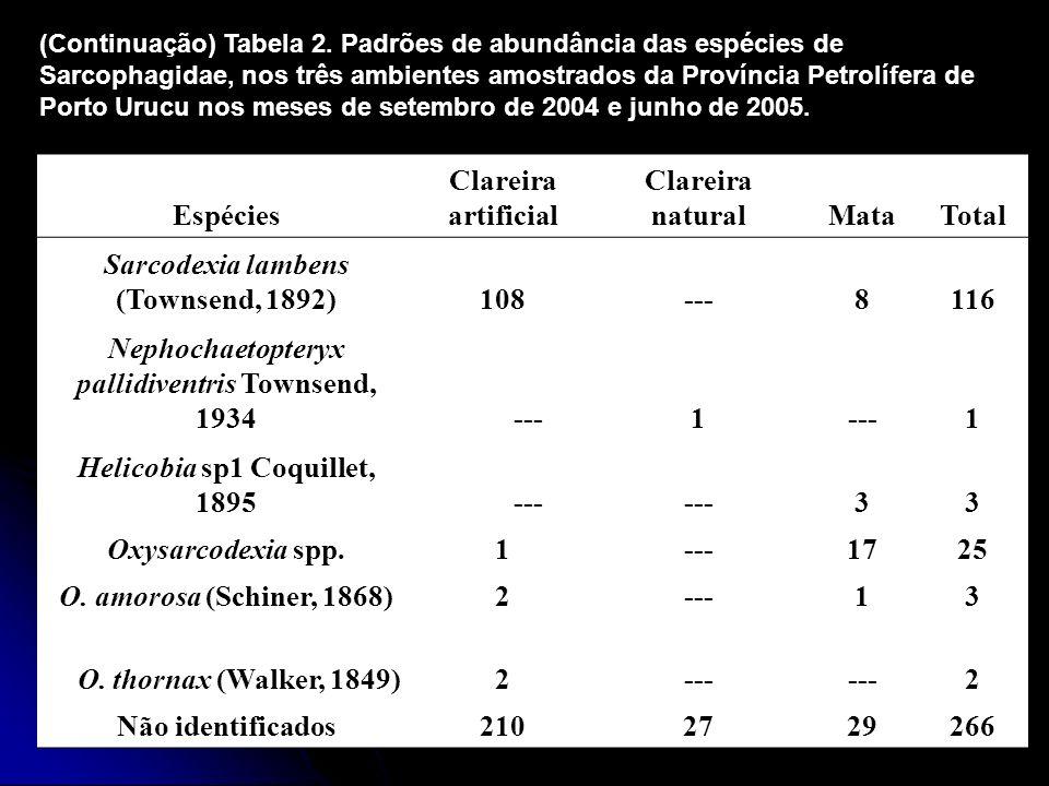 Sarcodexia lambens (Townsend, 1892) 108 --- 8 116