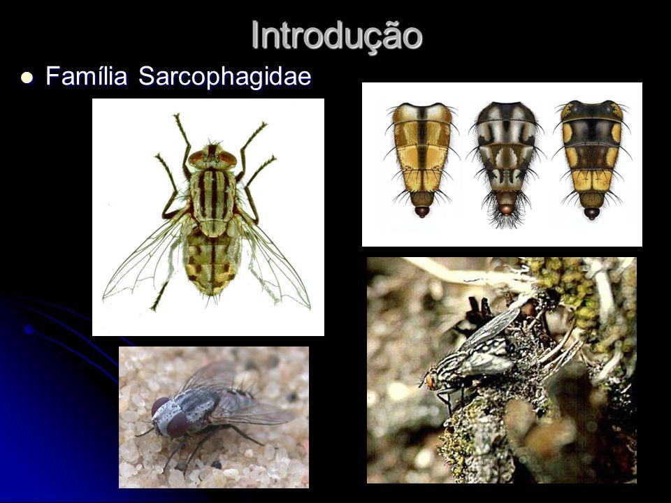 Introdução Família Sarcophagidae