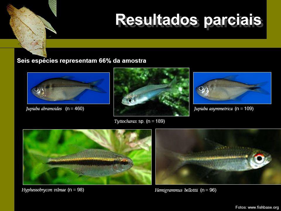Resultados parciais Seis espécies representam 66% da amostra