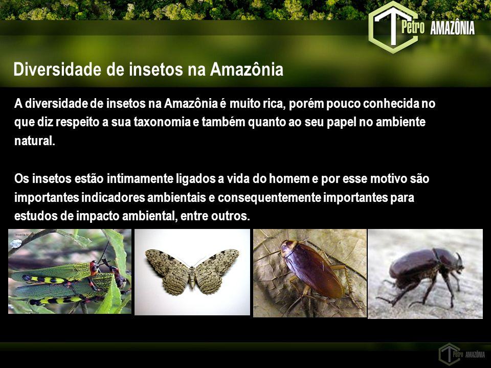 Diversidade de insetos na Amazônia