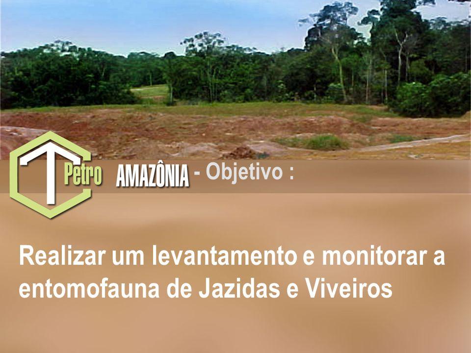 Rede CTPetro Amazônia (2002-2006)